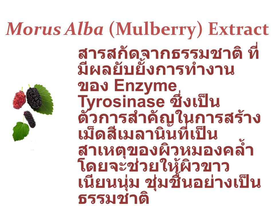 Morus Alba (Mulberry) Extract สารสกัดจากธรรมชาติ ที่ มีผลยับยั้งการทำงาน ของ Enzyme Tyrosinase ซึ่งเป็น ตัวการสำคัญในการสร้าง เม็ดสีเมลานินที่เป็น สาเหตุของผิวหมองคล้ำ โดยจะช่วยให้ผิวขาว เนียนนุ่ม ชุ่มชื้นอย่างเป็น ธรรมชาติ