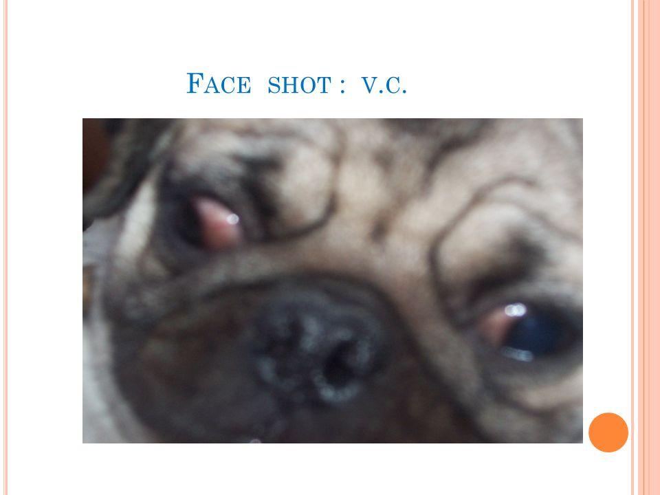 F ACE SHOT : V. C.