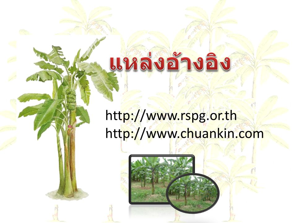 http://www.rspg.or.th http://www.chuankin.com