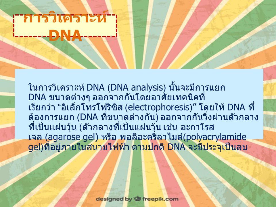 การวิเคราะห์ DNA ในการวิเคราะห์ DNA (DNA analysis) นั้นจะมีการแยก DNA ขนาดต่างๆ ออกจากกันโดยอาศัยเทคนิคที่ เรียกว่า อิเล็กโทรโฟริซิส (electrophoresis) โดยให้ DNA ที่ ต้องการแยก (DNA ที่ขนาดต่างกัน ) ออกจากกันวิ่งผ่านตัวกลาง ที่เป็นแผ่นวุ้น ( ตัวกลางที่เป็นแผ่นวุ้น เช่น อะกาโรส เจล (agarose gel) หรือ พอลิอะคริลาไมด์ (polyacrylamide gel) ที่อยู่ภายในสนามไฟฟ้า ตามปกติ DNA จะมีประจุเป็นลบ