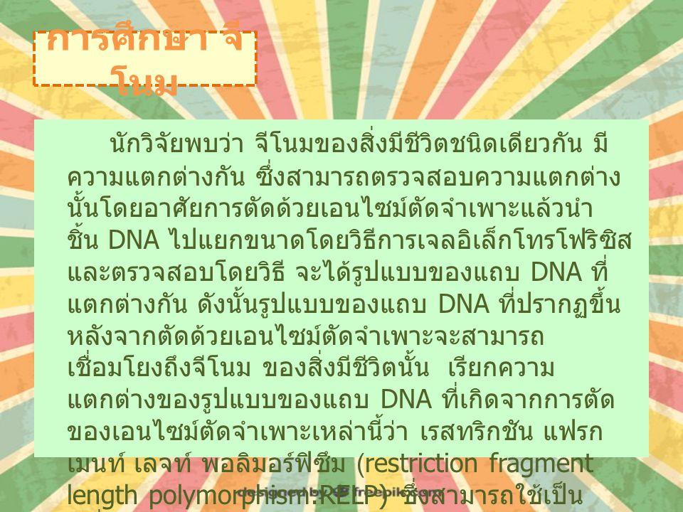 การศึกษา จี โนม นักวิจัยพบว่า จีโนมของสิ่งมีชีวิตชนิดเดียวกัน มี ความแตกต่างกัน ซึ่งสามารถตรวจสอบความแตกต่าง นั้นโดยอาศัยการตัดด้วยเอนไซม์ตัดจำเพาะแล้วนำ ชิ้น DNA ไปแยกขนาดโดยวิธีการเจลอิเล็กโทรโฟริซิส และตรวจสอบโดยวิธี จะได้รูปแบบของแถบ DNA ที่ แตกต่างกัน ดังนั้นรูปแบบของแถบ DNA ที่ปรากฏขึ้น หลังจากตัดด้วยเอนไซม์ตัดจำเพาะจะสามารถ เชื่อมโยงถึงจีโนม ของสิ่งมีชีวิตนั้น เรียกความ แตกต่างของรูปแบบของแถบ DNA ที่เกิดจากการตัด ของเอนไซม์ตัดจำเพาะเหล่านี้ว่า เรสทริกชัน แฟรก เมนท์ เลจท์ พอลิมอร์ฟิซึม (restriction fragment length polymorphism:RELP) ซึ่งสามารถใช้เป็น เครื่องหมายทางพันุกรรม (genetic marker) ได้