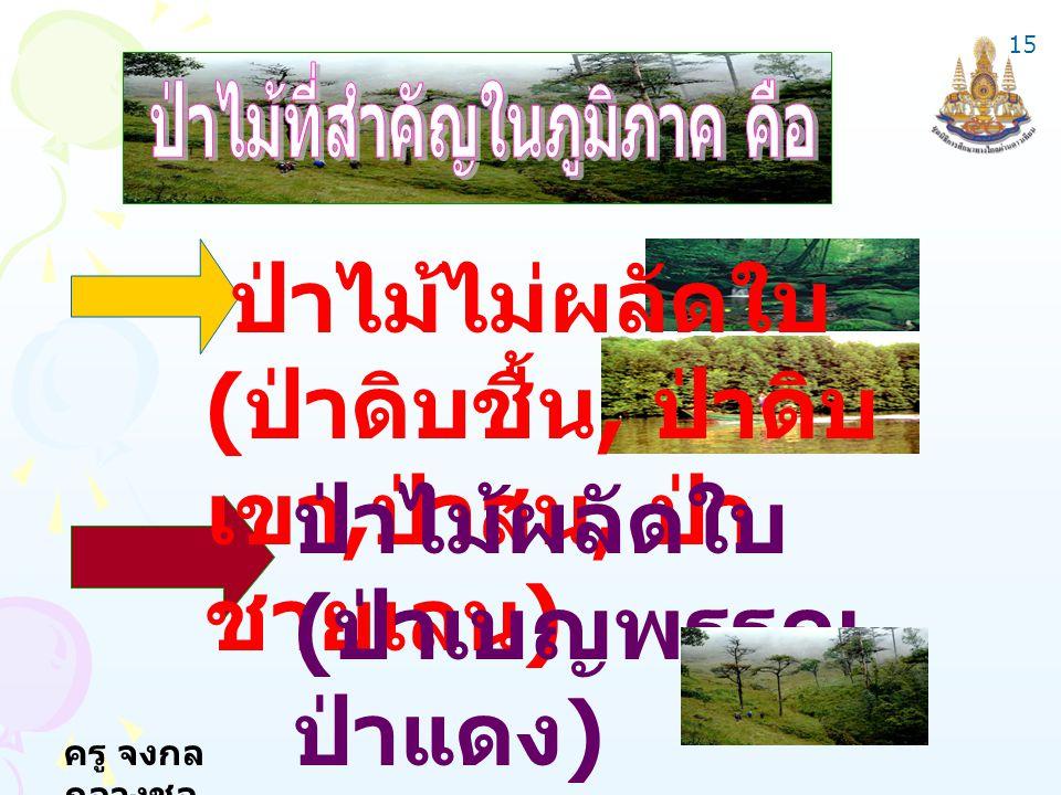 ครู จงกล กลางชล ป่าไม้ไม่ผลัดใบ ( ป่าดิบชื้น, ป่าดิบ เขา, ป่าสน, ป่า ชายเลน ) ป่าไม้ผลัดใบ ( ป่าเบญพรรณ ป่าแดง ) 15