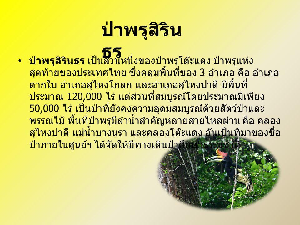 ป่าพรุสิรินธร เป็นส่วนหนึ่งของป่าพรุโต๊ะแดง ป่าพรุแห่ง สุดท้ายของประเทศไทย ซึ่งคลุมพื้นที่ของ 3 อำเภอ คือ อำเภอ ตากใบ อำเภอสุไหงโกลก และอำเภอสุไหงปาดี