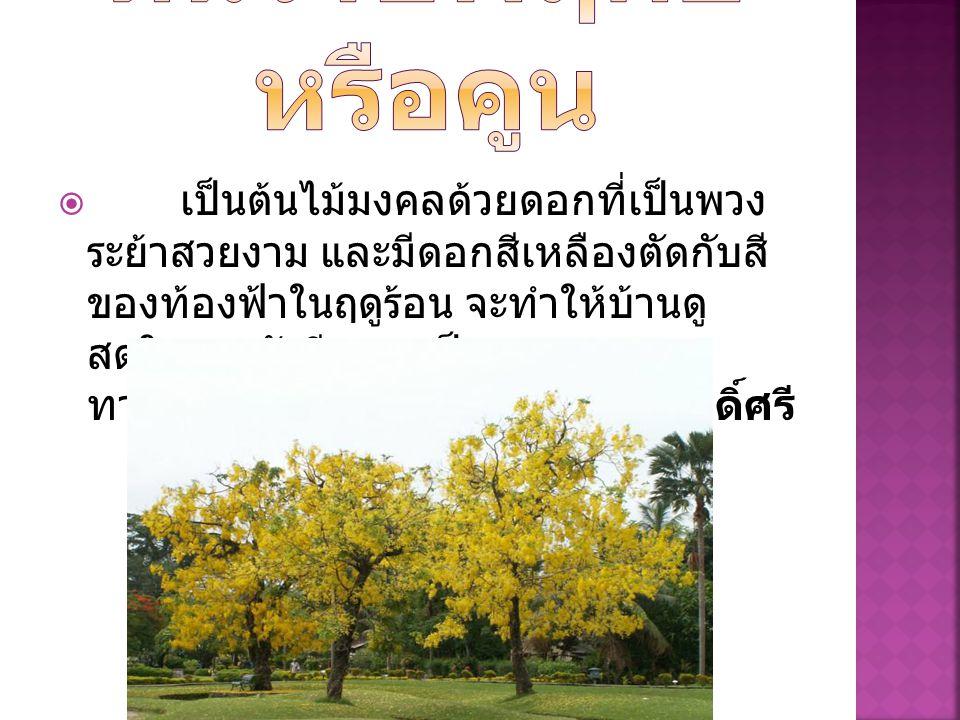  เป็นต้นไม้มงคลด้วยดอกที่เป็นพวง ระย้าสวยงาม และมีดอกสีเหลืองตัดกับสี ของท้องฟ้าในฤดูร้อน จะทำให้บ้านดู สดใสและยังมีความเป็นมงคล ทางด้าน