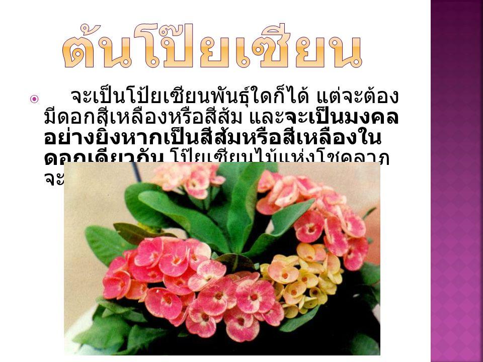  จะเป็นโป้ยเซียนพันธุ์ใดก็ได้ แต่จะต้อง มีดอกสีเหลืองหรือสีส้ม และจะเป็นมงคล อย่างยิ่งหากเป็นสีส้มหรือสีเหลืองใน ดอกเดียวกัน โป๊ยเซียนไม้แห่งโชคลาภ จ