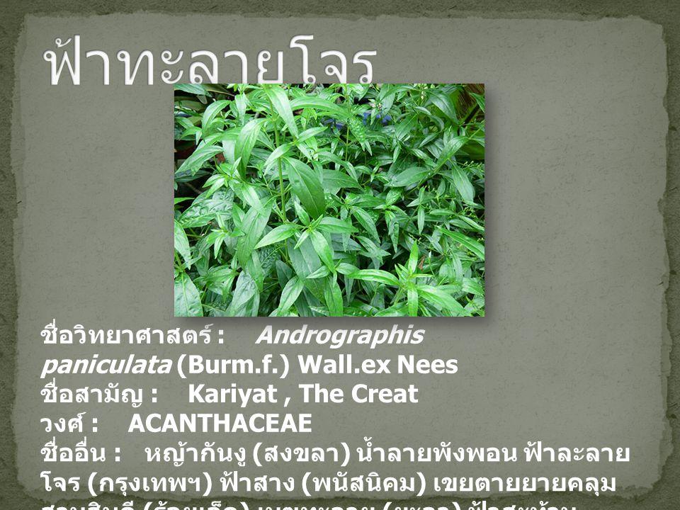 ชื่อวิทยาศาสตร์ : Andrographis paniculata (Burm.f.) Wall.ex Nees ชื่อสามัญ : Kariyat, The Creat วงศ์ : ACANTHACEAE ชื่ออื่น : หญ้ากันงู ( สงขลา ) น้ำล