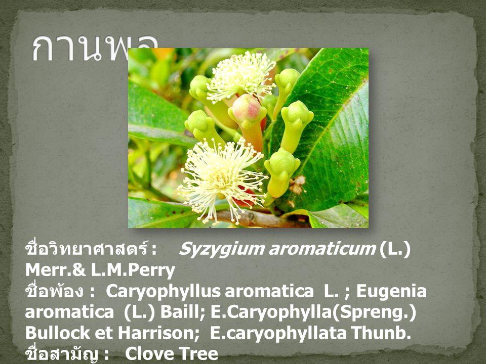 ชื่อวิทยาศาสตร์ : Syzygium aromaticum (L.) Merr.& L.M.Perry ชื่อพ้อง : Caryophyllus aromatica L. ; Eugenia aromatica (L.) Baill; E.Caryophylla(Spreng.