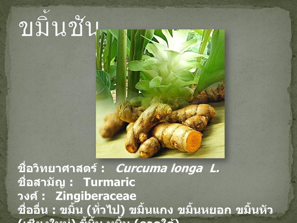 ชื่อวิทยาศาสตร์ : Curcuma longa L. ชื่อสามัญ : Turmaric วงศ์ : Zingiberaceae ชื่ออื่น : ขมิ้น ( ทั่วไป ) ขมิ้นแกง ขมิ้นหยอก ขมิ้นหัว ( เชียงใหม่ ) ขี้