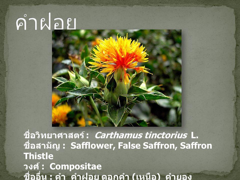 ชื่อวิทยาศาสตร์ : Carthamus tinctorius L. ชื่อสามัญ : Safflower, False Saffron, Saffron Thistle วงศ์ : Compositae ชื่ออื่น : คำ คำฝอย ดอกคำ ( เหนือ )