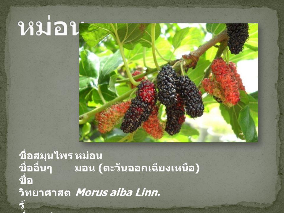 ชื่อสมุนไพรหม่อน ชื่ออื่นๆมอน ( ตะวันออกเฉียงเหนือ ) ชื่อ วิทยาศาสต ร์ Morus alba Linn. ชื่อวงศ์ Moraceae