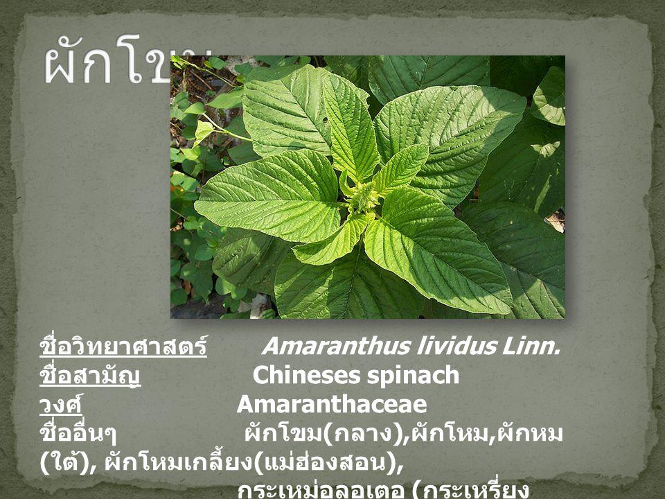 ชื่อวิทยาศาสตร์ Amaranthus lividus Linn. ชื่อสามัญ Chineses spinach วงศ์ Amaranthaceae ชื่ออื่นๆ ผักโขม ( กลาง ), ผักโหม, ผักหม ( ใต้ ), ผักโหมเกลี้ยง