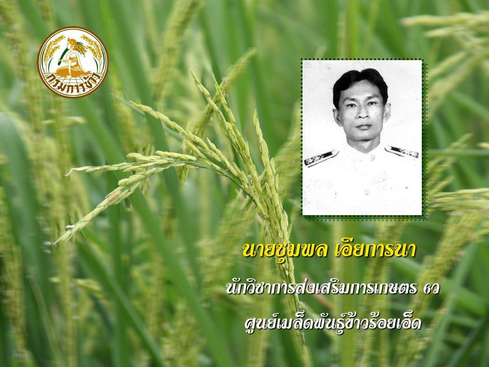 นายชุมพล เอียการนา นักวิชาการส่งเสริมการเกษตร 6 ว ศูนย์เมล็ดพันธุ์ข้าวร้อยเอ็ด