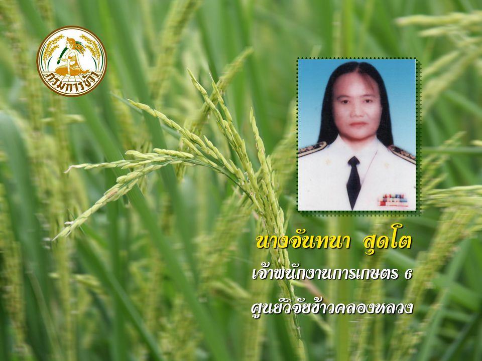 นางจันทนา สุดโต เจ้าพนักงานการเกษตร 6 ศูนย์วิจัยข้าวคลองหลวง