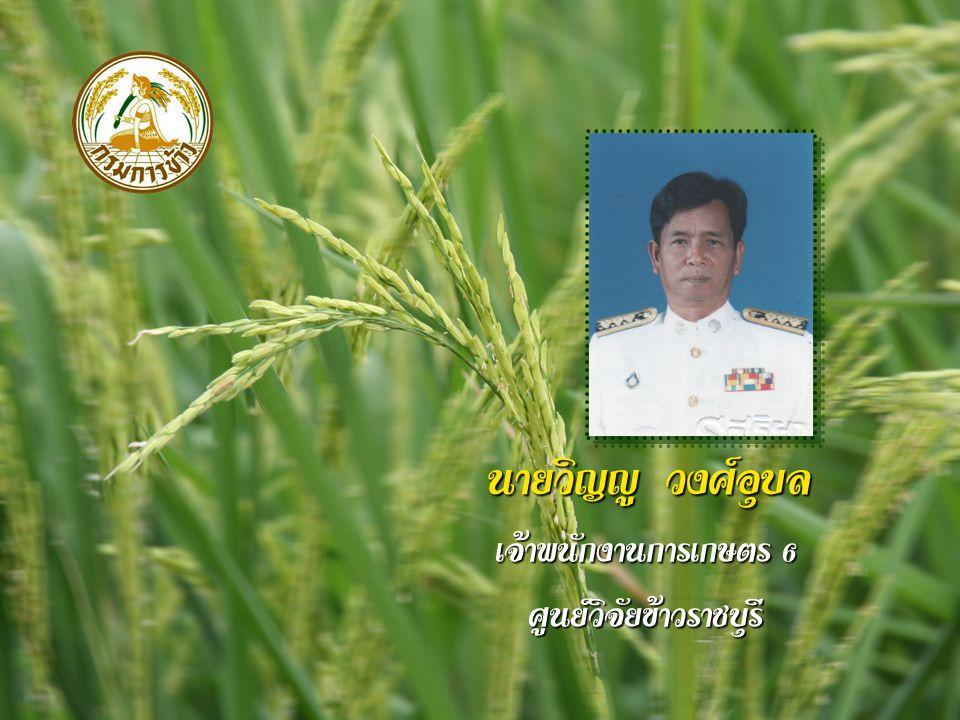 นายวิญญู วงศ์อุบล เจ้าพนักงานการเกษตร 6 ศูนย์วิจัยข้าวราชบุรี