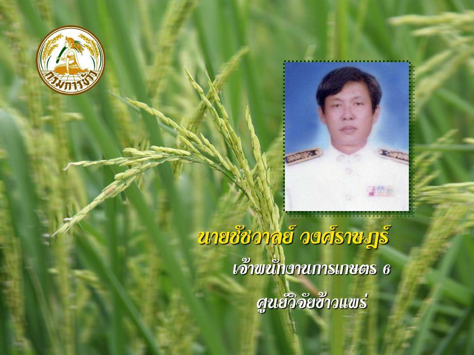 นายชัชวาลย์ วงศ์ราษฎร์ เจ้าพนักงานการเกษตร 6 ศูนย์วิจัยข้าวแพร่