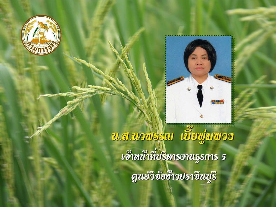 น. ส. นวพรรณ เบี้ยพุ่มพวง เจ้าหน้าที่บริหารงานธุรการ 5 ศูนย์วิจัยข้าวปราจีนบุรี