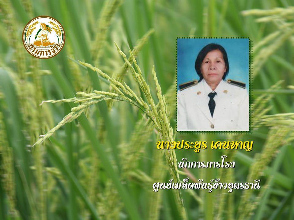นางประยูร เคนหาญ นักการภารโรงศูนย์เมล็ดพันธุ์ข้าวอุดรธานี