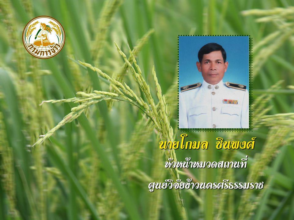 นายโกมล ชินพงศ์ หัวหน้าหมวดสถานที่ศูนย์วิจัยข้าวนครศรีธรรมราช