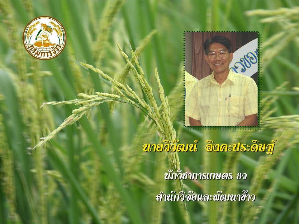 นายเอกสงวน ชูวิสิฐกุล นักวิชาการเกษตร 8 ว สำนักพัฒนาผลิตภัณฑ์ข้าว