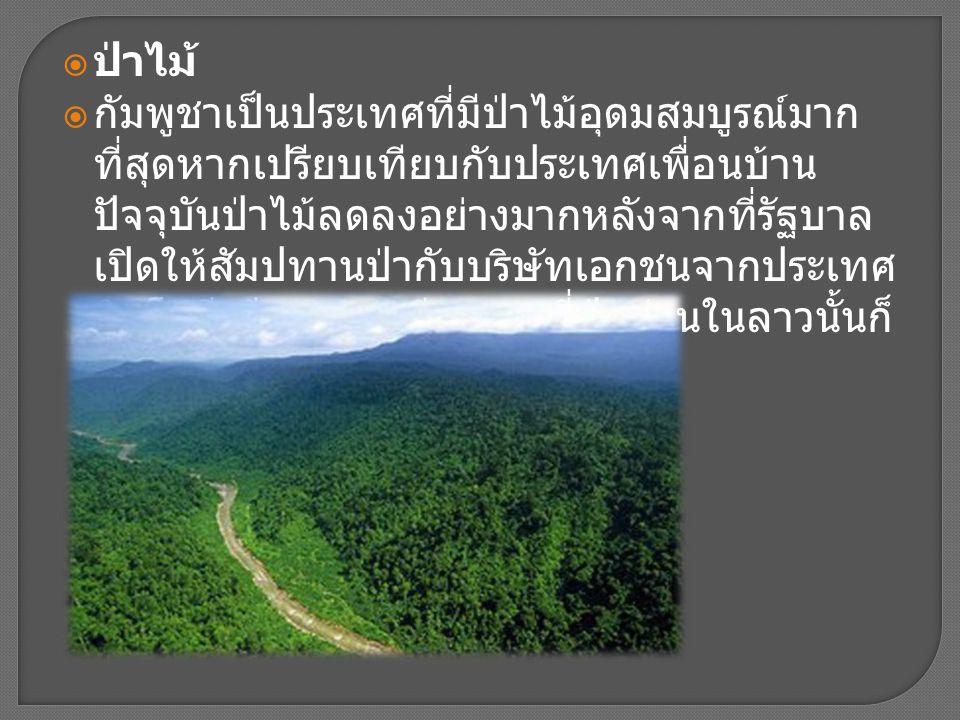  ป่าไม้  กัมพูชาเป็นประเทศที่มีป่าไม้อุดมสมบูรณ์มาก ที่สุดหากเปรียบเทียบกับประเทศเพื่อนบ้าน ปัจจุบันป่าไม้ลดลงอย่างมากหลังจากที่รัฐบาล เปิดให้สัมปทา