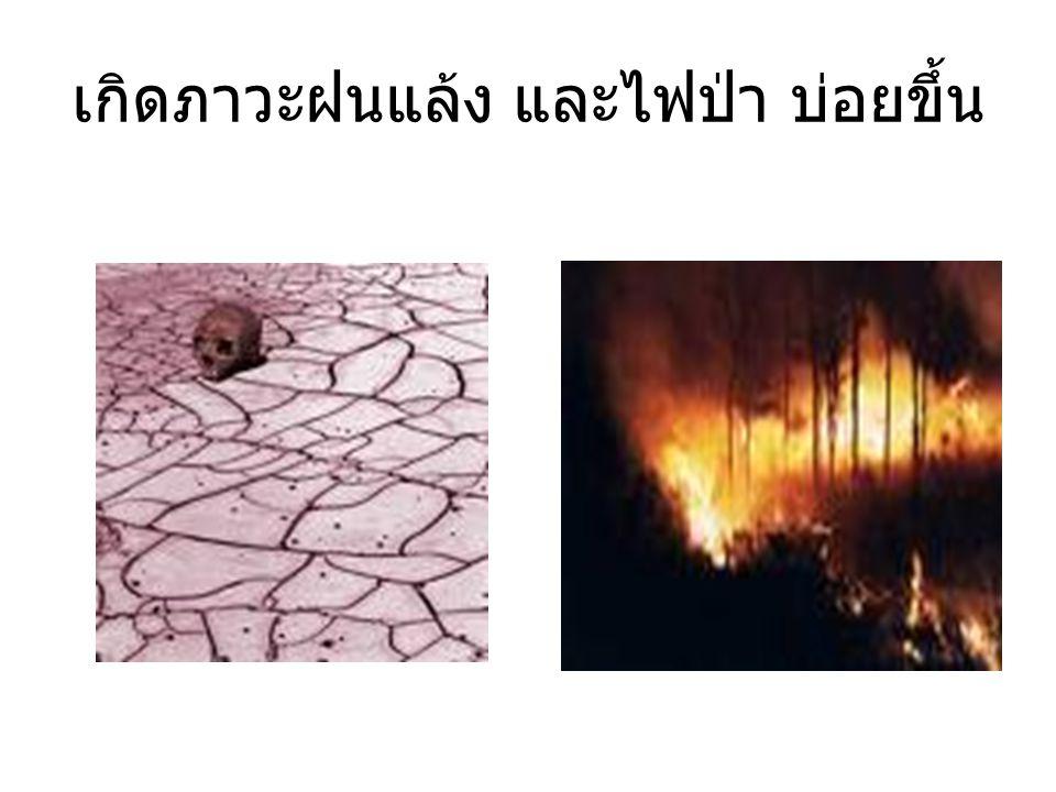 เกิดภาวะฝนแล้ง และไฟป่า บ่อยขึ้น