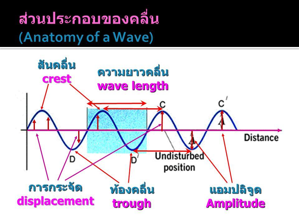 สันคลื่น crest ท้องคลื่น trough แอมปลิจูด Amplitude การกระจัด displacement ความยาวคลื่น wave length