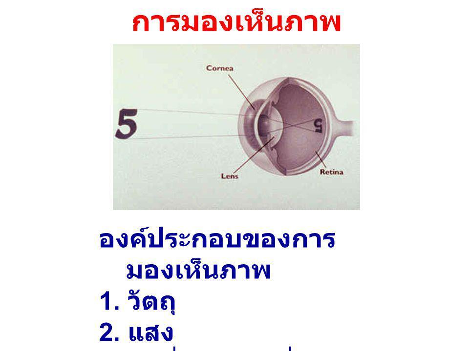 ลักษณะของการมองเห็นภาพ 1.การมองเห็นภาพจาก วัตถุโดยตรง 2.