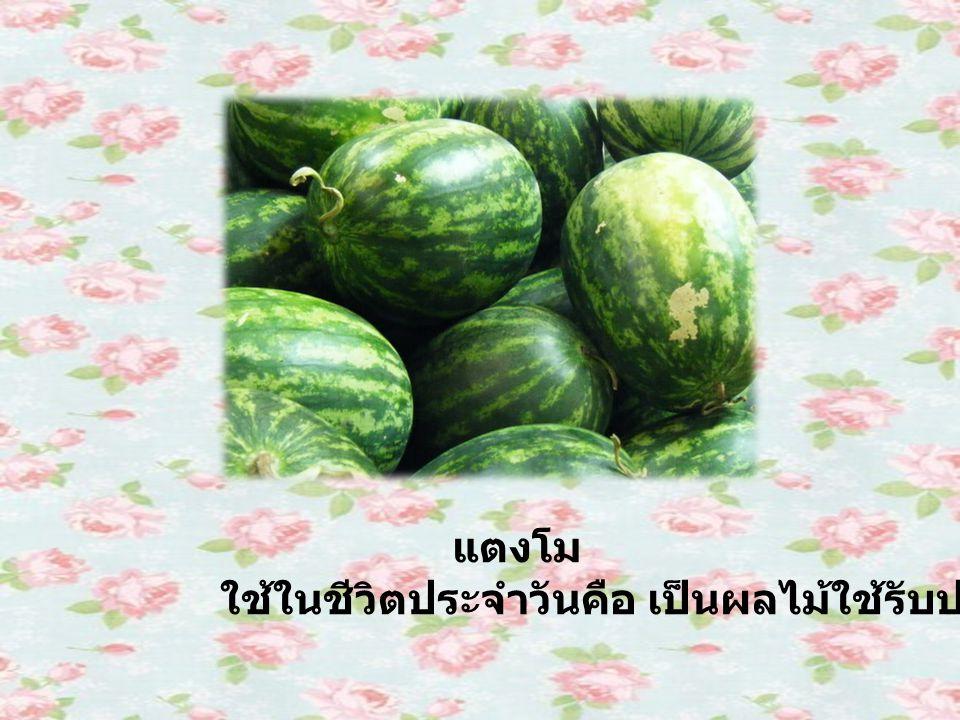 แตงโม ใช้ในชีวิตประจำวันคือ เป็นผลไม้ใช้รับประทาน