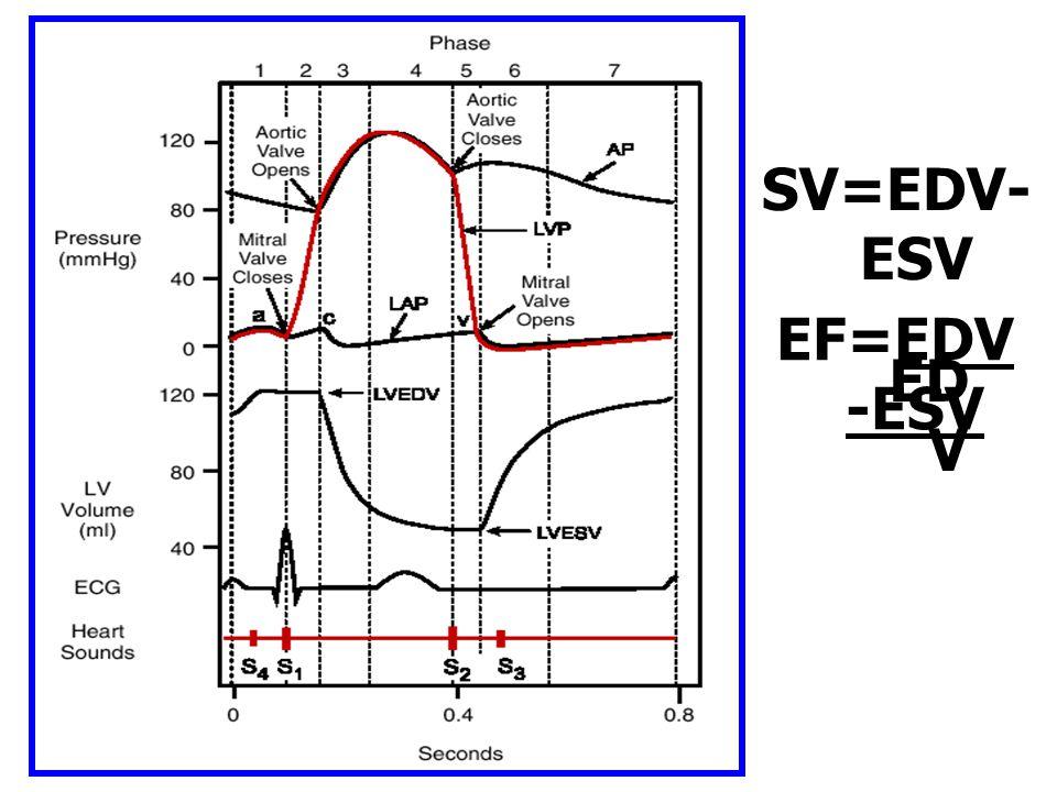 SV=EDV- ESV EF=EDV -ESV ED V