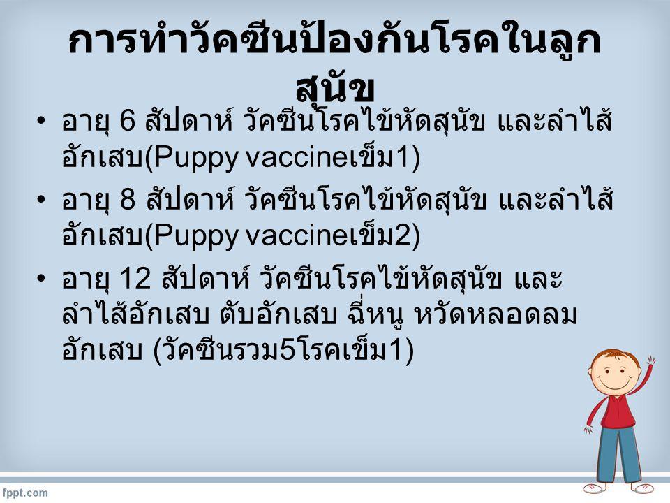 การทำวัคซีนป้องกันโรคในลูก สุนัข อายุ 6 สัปดาห์ วัคซีนโรคไข้หัดสุนัข และลำไส้ อักเสบ (Puppy vaccine เข็ม 1) อายุ 8 สัปดาห์ วัคซีนโรคไข้หัดสุนัข และลำไ
