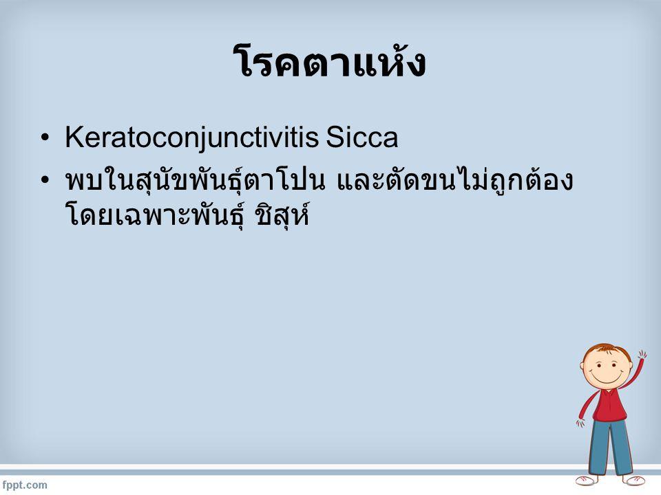 โรคตาแห้ง Keratoconjunctivitis Sicca พบในสุนัขพันธุ์ตาโปน และตัดขนไม่ถูกต้อง โดยเฉพาะพันธุ์ ชิสุห์