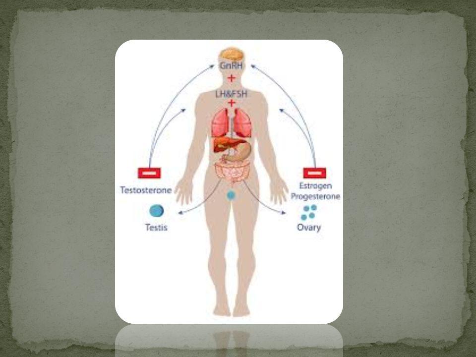  ฮอร์โมน คือ สารเคมีที่สร้างมาจากต่อมไร้ท่อ ( endocrine gland ) หรือเนื้อเยื่อ ( endocrine tissue ) แล้วเข้าสู่ระบบ หมุนเวียนเลือด ลำเลียงไปยังส่วนต่างๆ ของร่างกายเพื่อ ควบคุมการทำงานของอวัยวะเป้าหมาย ( target organ ) ฮอร์โมนส่วนใหญ่เป็นสารประเภทโปรตีน อามีน และส เตียรอยด์  ฮอร์โมนจากต่อมใต้สมอง ต่อมใต้สมอง ( pituitary gland ) อยู่ตรงส่วนล่างของสมอง แบ่งออกเป็น 3 ส่วน คือ - ต่อมใต้สมองส่วนหน้า ( anterior lobe of pituitary gland ) - ต่อมใต้สมองส่วนกลาง ( intermediated lobe of pituitary ) - ต่อมใต้สมองจากต่อมใต้สมองส่วนหลัง ( posterior lobe of pituitary gland )