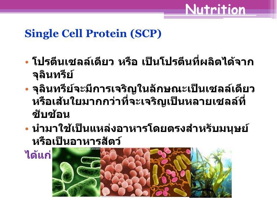 Single Cell Protein (SCP) โปรตีนเซลล์เดียว หรือ เป็นโปรตีนที่ผลิตได้จาก จุลินทรีย์ จุลินทรีย์จะมีการเจริญในลักษณะเป็นเซลล์เดียว หรือเส้นใยมากกว่าที่จะเจริญเป็นหลายเซลล์ที่ ซับซ้อน นำมาใช้เป็นแหล่งอาหารโดยตรงสำหรับมนุษย์ หรือเป็นอาหารสัตว์ ได้แก่ แบคทีเรีย ยีสต์ รา และสาหร่าย Nutrition