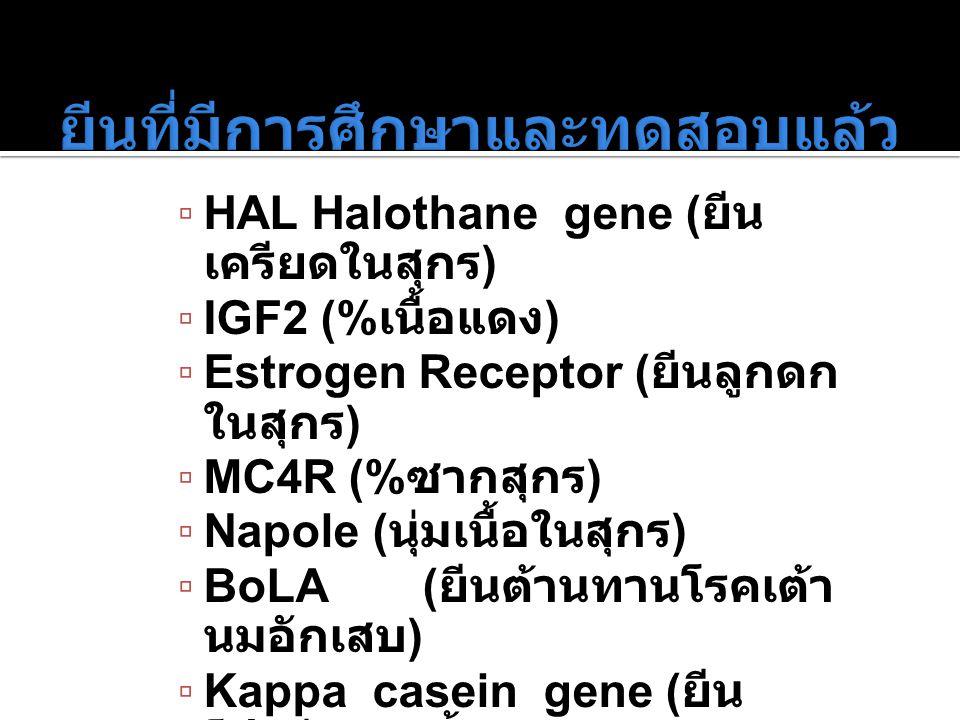 ▫ HAL Halothane gene ( ยีน เครียดในสุกร ) ▫ IGF2 (% เนื้อแดง ) ▫ Estrogen Receptor ( ยีนลูกดก ในสุกร ) ▫ MC4R (% ซากสุกร ) ▫ Napole ( นุ่มเนื้อในสุกร