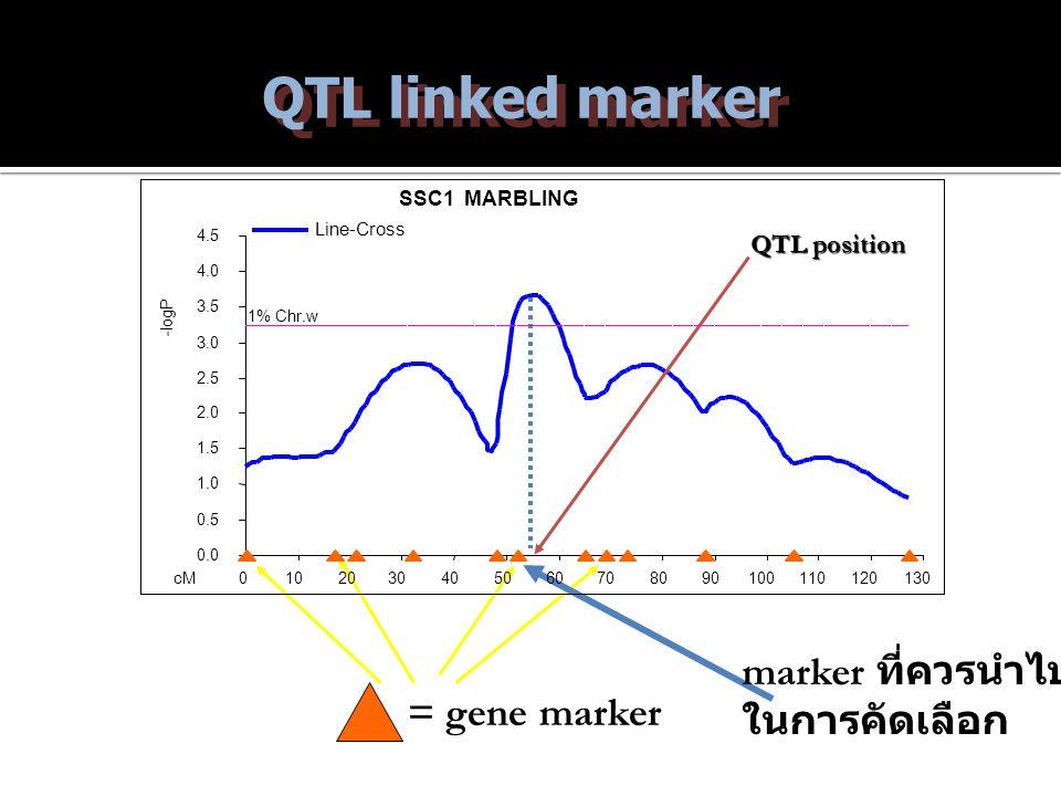 QTL linked marker = gene marker QTL position marker ที่ควรนำไปใช้ ในการคัดเลือก SSC1 MARBLING 0.0 0.5 1.0 1.5 2.0 2.5 3.0 3.5 4.0 4.5 0102030405060708