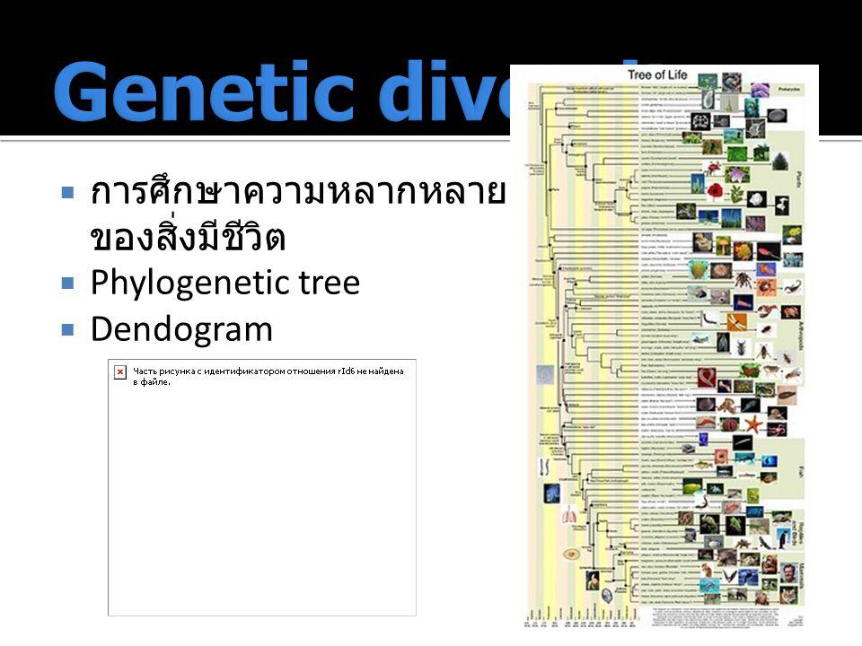  การศึกษาความหลากหลาย ของสิ่งมีชีวิต  Phylogenetic tree  Dendogram