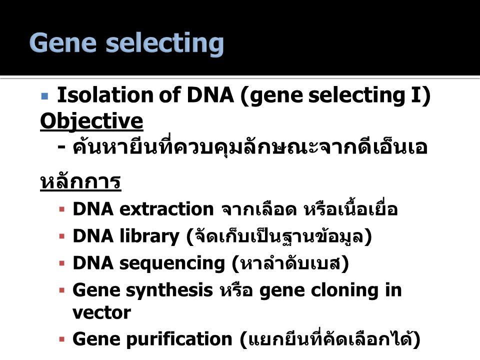 Isolation of DNA (gene selecting I) Objective - ค้นหายีนที่ควบคุมลักษณะจากดีเอ็นเอ หลักการ  DNA extraction จากเลือด หรือเนื้อเยื่อ  DNA library (