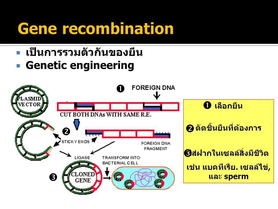  เป็นการรวมตัวกันของยีน  Genetic engineering    เลือกยีน ตัดชิ้นยีนที่ต้องการ ใส่ฝากในเซลล์สิ่งมีชีวิต เช่น แบคทีเรีย. เซลล์ไข่, และ sperm   
