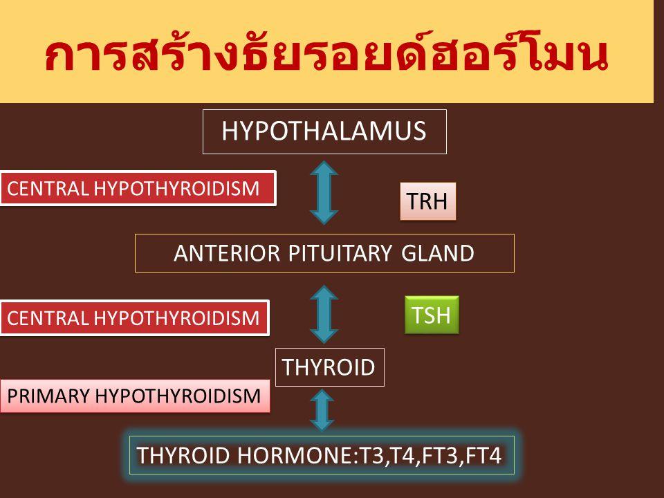 การสร้างธัยรอยด์ฮอร์โมน HYPOTHALAMUS ANTERIOR PITUITARY GLAND THYROID THYROID HORMONE:T3,T4,FT3,FT4 TRH TSH PRIMARY HYPOTHYROIDISM CENTRAL HYPOTHYROID