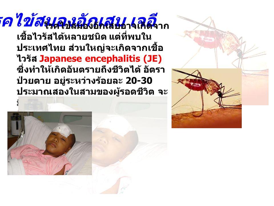 โรคไข้สมองอักเสบอาจเกิดจาก เชื้อไวรัสได้หลายชนิด แต่ที่พบใน ประเทศไทย ส่วนใหญ่จะเกิดจากเชื้อ ไวรัส Japanese encephalitis (JE) ซึ่งทำให้เกิดอันตรายถึงช