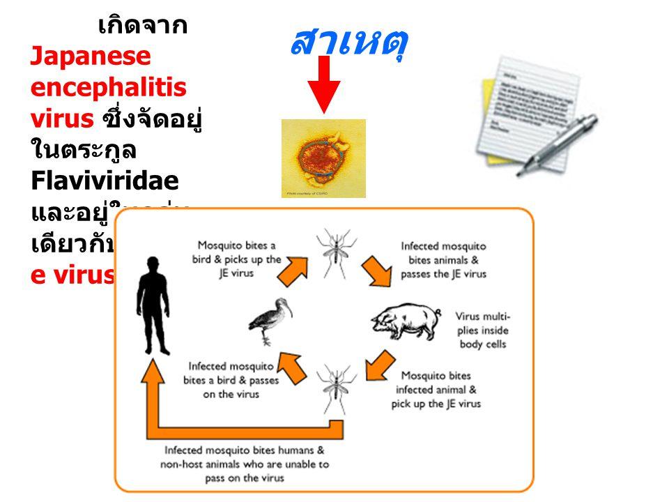 สาเหตุ เกิดจาก Japanese encephalitis virus ซึ่งจัดอยู่ ในตระกูล Flaviviridae และอยู่ในกลุ่ม เดียวกับ dengu e virus