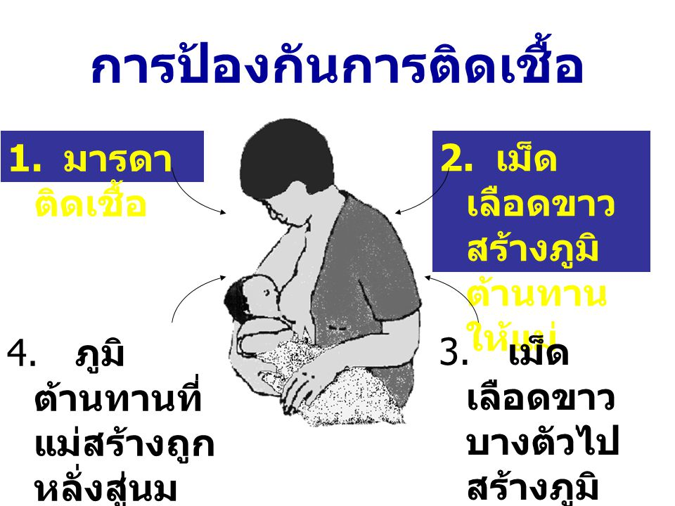 การป้องกันการติดเชื้อ 1. มารดา ติดเชื้อ 2. เม็ด เลือดขาว สร้างภูมิ ต้านทาน ให้แม่ 4. ภูมิ ต้านทานที่ แม่สร้างถูก หลั่งสู่นม แม่ไป ป้องกัน การติดเชื้อ