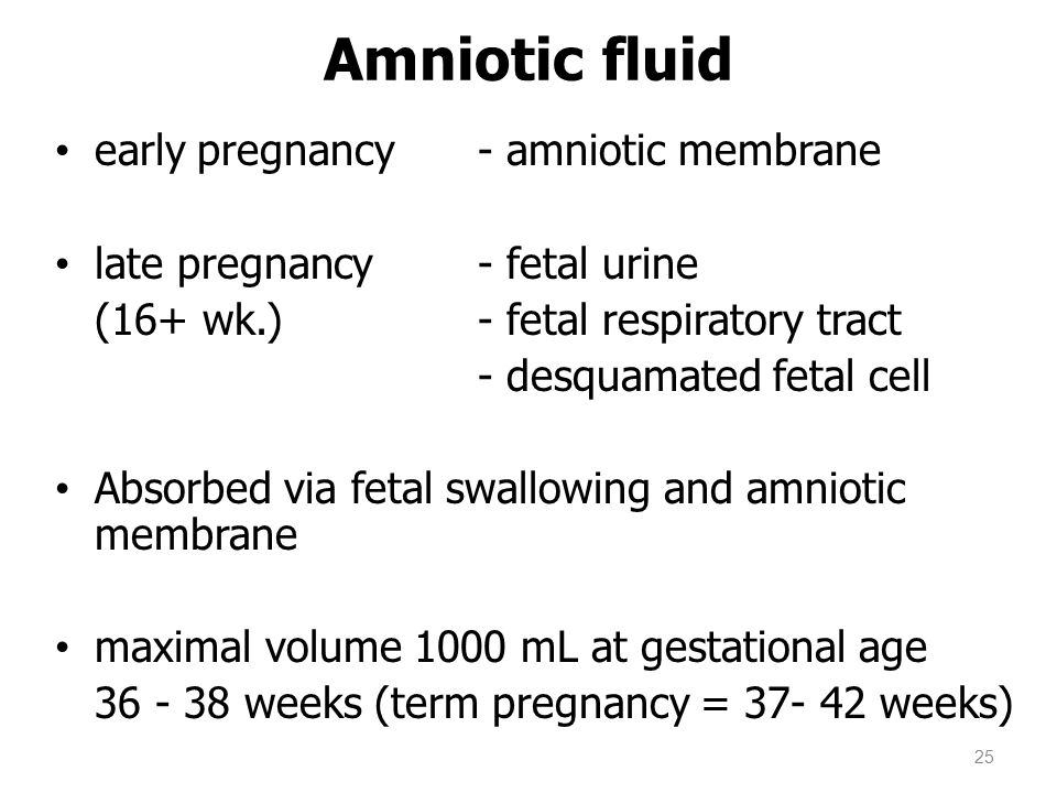 Amniotic fluid early pregnancy- amniotic membrane late pregnancy- fetal urine (16+ wk.) - fetal respiratory tract - desquamated fetal cell Absorbed vi