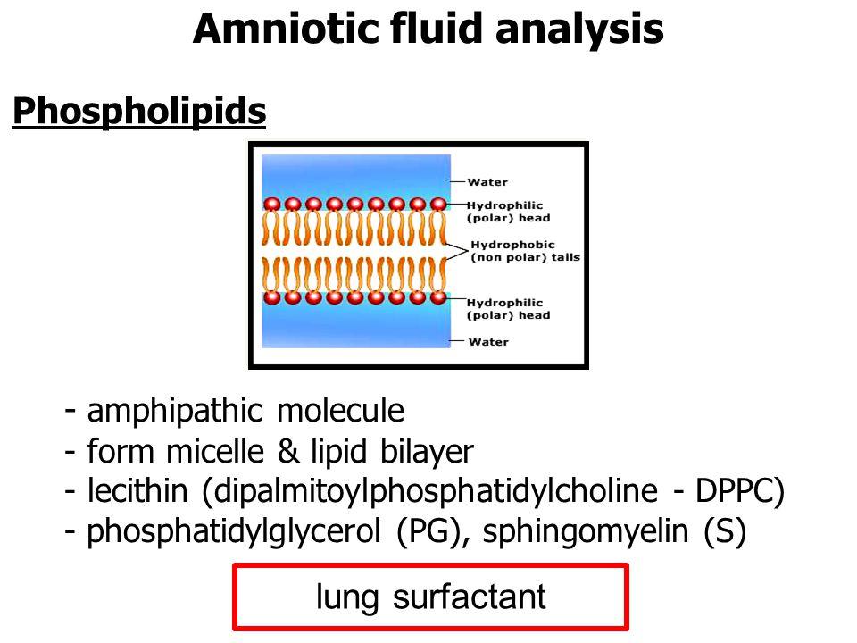 - amphipathic molecule - form micelle & lipid bilayer - lecithin (dipalmitoylphosphatidylcholine - DPPC) - phosphatidylglycerol (PG), sphingomyelin (S) Phospholipids Amniotic fluid analysis lung surfactant
