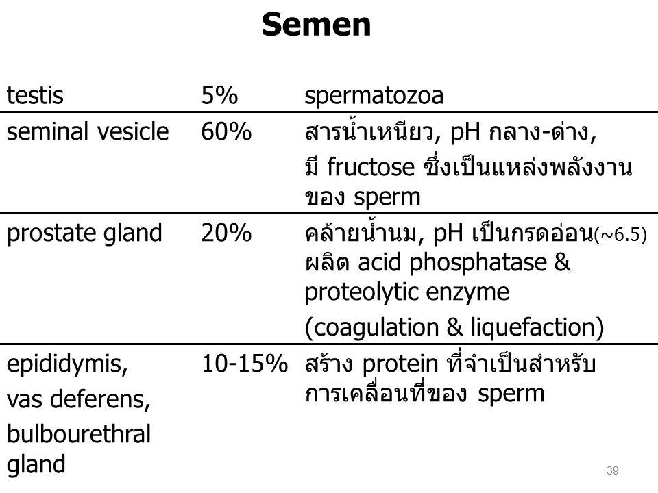 Semen testis5%spermatozoa seminal vesicle60%สารน้ำเหนียว, pH กลาง-ด่าง, มี fructose ซึ่งเป็นแหล่งพลังงาน ของ sperm prostate gland20%คล้ายน้ำนม, pH เป็นกรดอ่อน (~6.5) ผลิต acid phosphatase & proteolytic enzyme (coagulation & liquefaction) epididymis, vas deferens, bulbourethral gland 10-15%สร้าง protein ที่จำเป็นสำหรับ การเคลื่อนที่ของ sperm 39