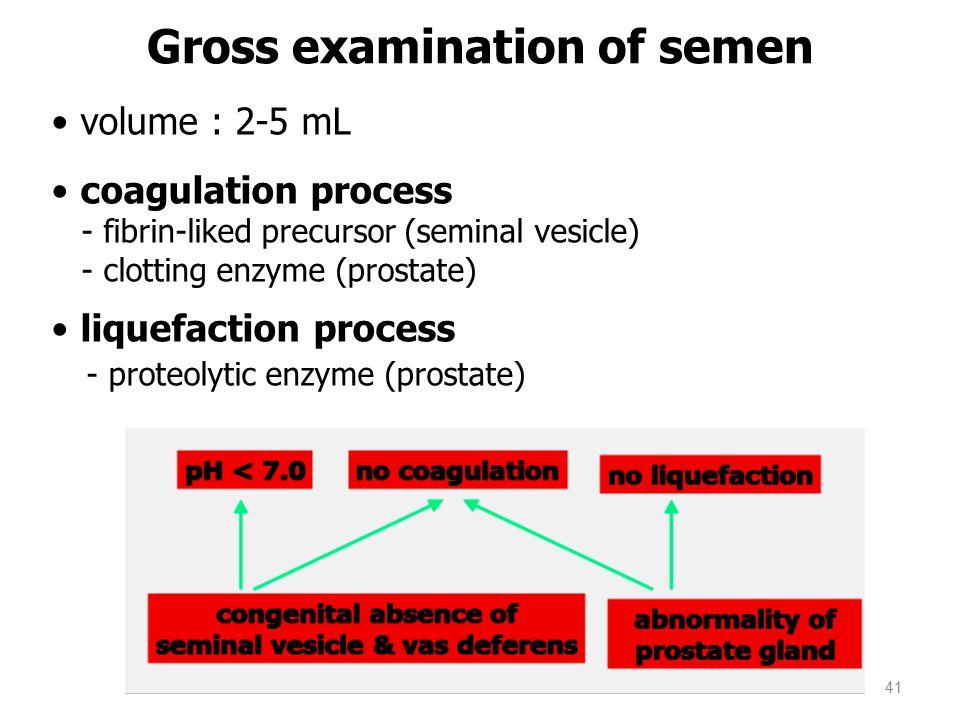 volume : 2-5 mL coagulation process - fibrin-liked precursor (seminal vesicle) - clotting enzyme (prostate) liquefaction process - proteolytic enzyme (prostate) Gross examination of semen 41