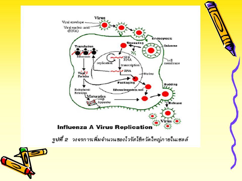 ระบาดวิทยาเชิง บรรยาย ขั้นตอนการหาความรู้ (ทางระบาดวิทยา) นิยาม(ของปัญหา) ขนาด และ ความรุนแรง บุคคล, เวลา, สถานที่ Host, Agent, Environment + กระบวนกา