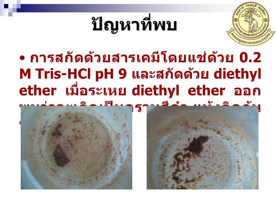 การสกัดด้วยสารเคมีโดยแช่ด้วย 0.2 M Tris-HCl pH 9 และสกัดด้วย diethyl ether เมื่อระเหย diethyl ether ออก พบว่าจะเกิดเป็นคราบสีดำ แห้งติดก้น ขวด ปัญหาที