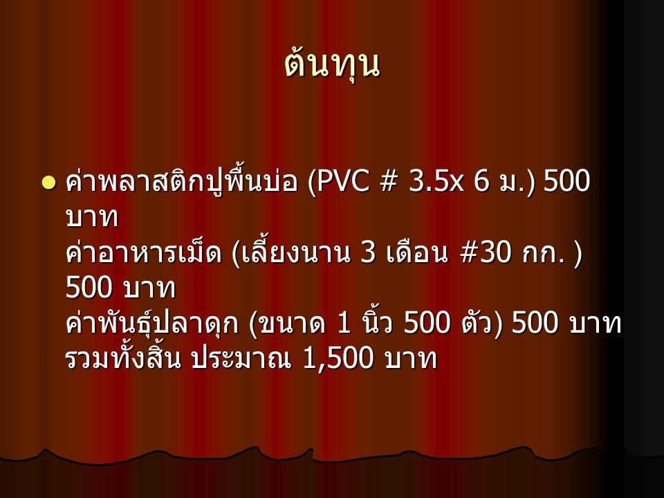 ต้นทุน ค่าพลาสติกปูพื้นบ่อ (PVC # 3.5x 6 ม.) 500 บาท ค่าอาหารเม็ด (เลี้ยงนาน 3 เดือน #30 กก. ) 500 บาท ค่าพันธุ์ปลาดุก (ขนาด 1 นิ้ว 500 ตัว) 500 บาท ร