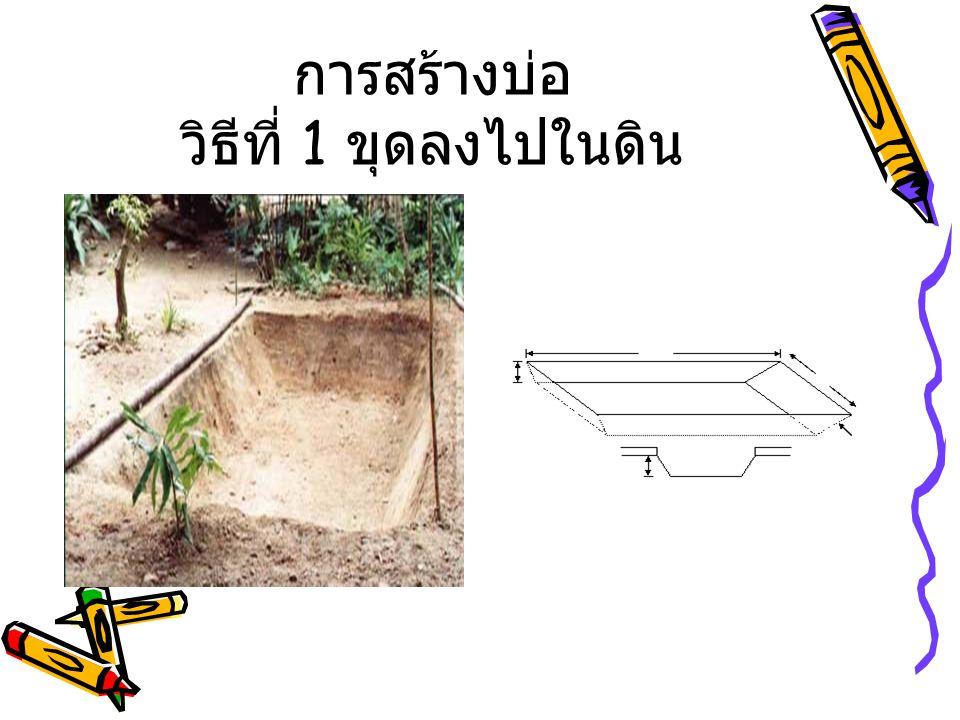 ต้นทุน ค่าพลาสติกปูพื้นบ่อ (PVC # 3.5x 6 ม.) 500 บาท ค่าอาหารเม็ด (เลี้ยงนาน 3 เดือน #30 กก.